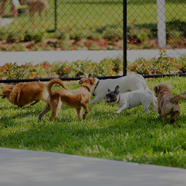 Large Dog Park at Barbara Worth Apartments